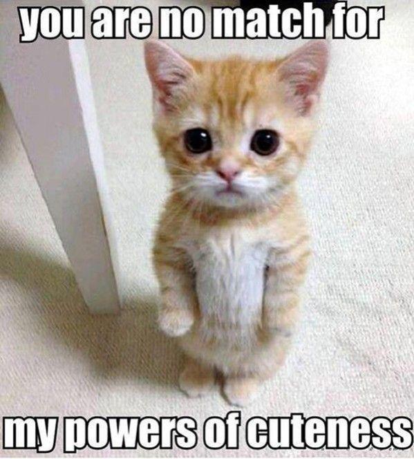 funny-kittens-humor-kittens-funny-cats-meme-for-more-humor-pictures-visit-www-bestfunnyjokes4u-c_original